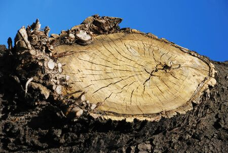 suface: wooden circle with a split cut of the log; Stock Photo