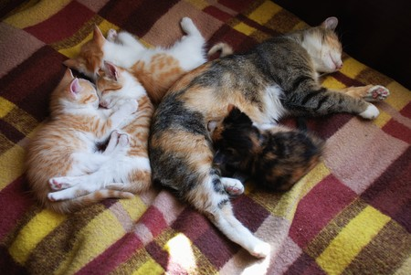 sleeping cat and four kittens on the rug