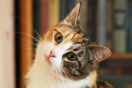 sweet kitty look at camera, close-up face