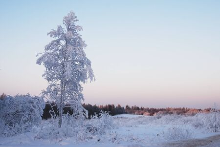 lone trees covered with winter snow, horizontal  photo