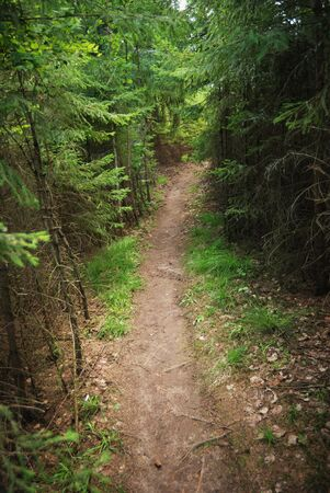 trail running: trail in a dense forest in summer