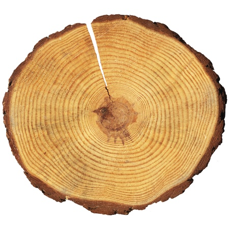 wooden circle with a split cut of the log Stock Photo