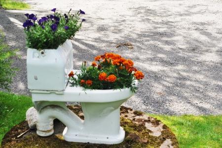 drollery: flowerpot bowl of flowers in the garden