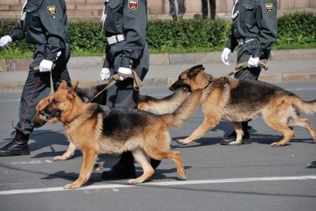 perro policia: polic�a rusa con perros caminando por la calle