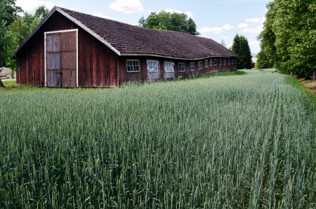 suomi: old barn is standing in the field, Finland  Editorial