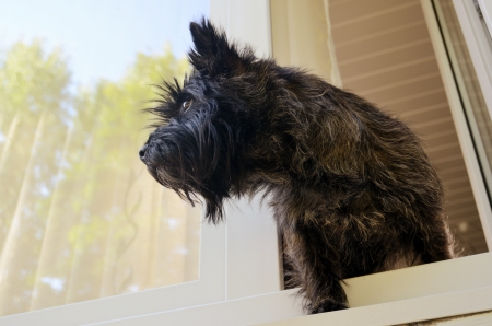 dog looking out the window in summer