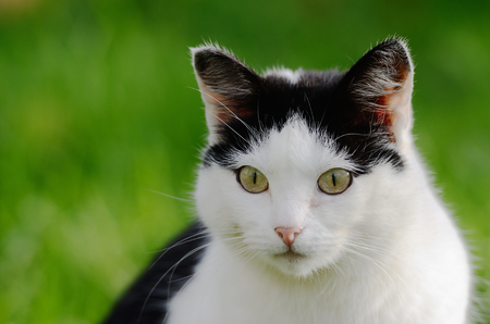 curiously: cat curiously looking forward against green  Stock Photo