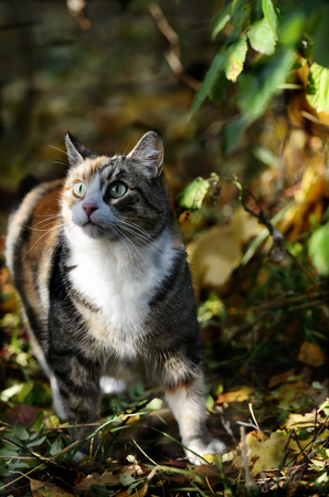 curiously: cat curiously looking up in the forest Stock Photo