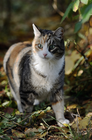 cat curiously looking forward in the forest Stock Photo - 23011507