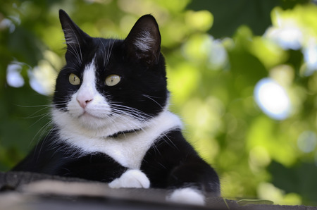 black and white cat on the roof  look to side