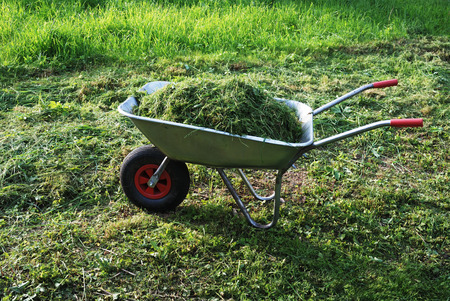 clippings: wheelbarrow on a lawn with fresh grass clippings in summer