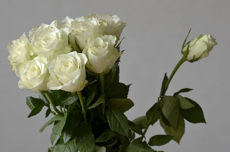 attentions: bouquet of roses and a rose unblown separately Stock Photo