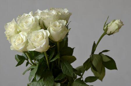 uprzejmości: bouquet of roses and a rose unblown separately Zdjęcie Seryjne