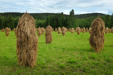 haycock: haystacks in field on a background of forest