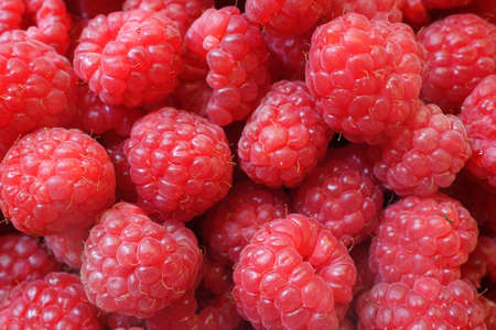 rubus: fresh red berries Raspberry European, Rubus idaeus
