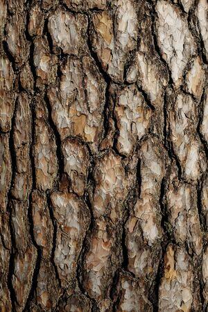 tree bark: bark of pine tree close up, vertical