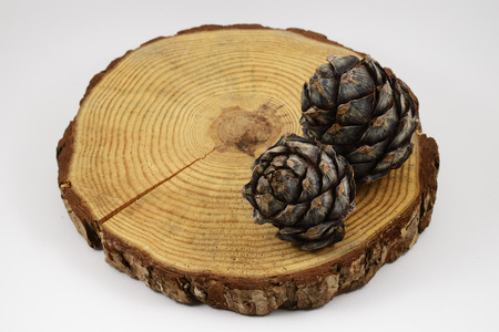 suface: wooden circle with a split cut of the log and two pine cones, white background
