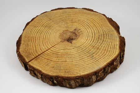 suface: wooden circle with a split cut of the log on white background