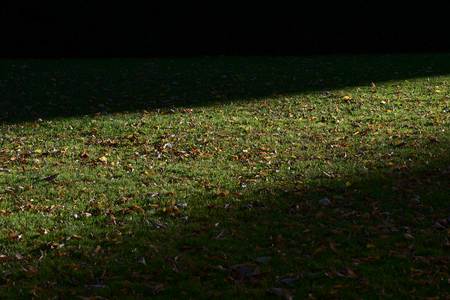 sward: green grass and autumn leaves illuminated by the sun Stock Photo