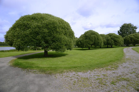 groomed coastal park with shorn trees and lawn