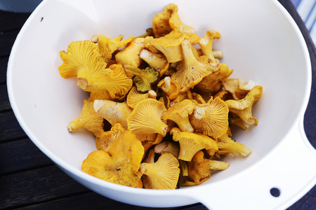 fresh chanterelle mushrooms in a plastic white container Stock Photo