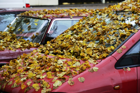 autumn yellow leaves on the hood and windshield of the car Stok Fotoğraf