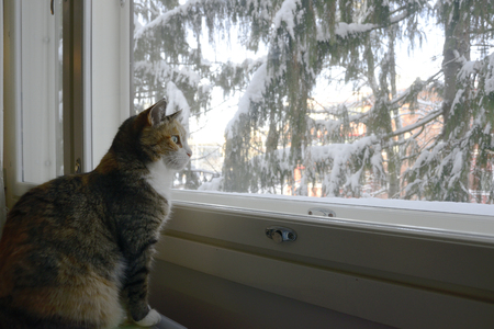 Tricolor cat sits by the window in winter 免版税图像