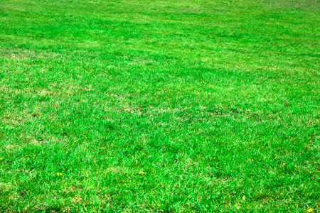 level playing field: Beautiful green grass texture from a field