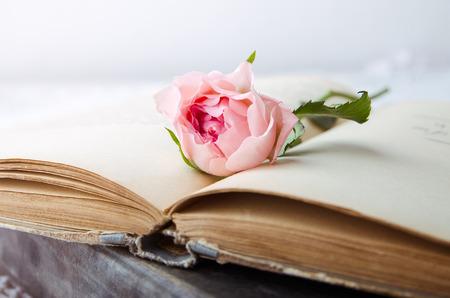 오픈 오래 된 책에 핑크 로즈
