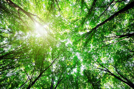 beautiful green forest Stock Photo