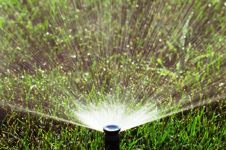 스프링클러 헤드 녹색 잔디에 물을 살포 스톡 콘텐츠