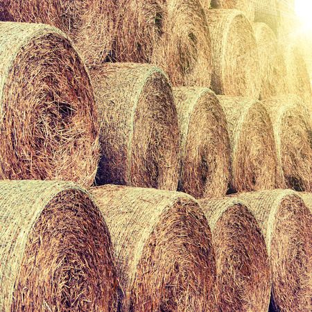 hay and straw bales in the end of summer Stok Fotoğraf