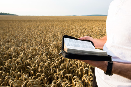 teaching adult: Man holding open Bible in a wheat field