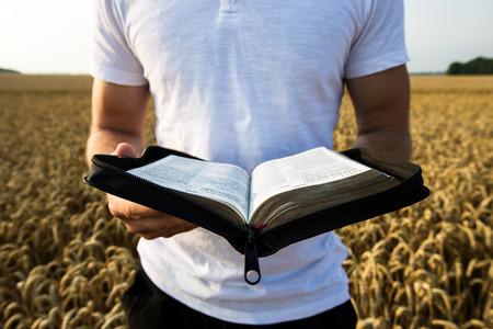 historias biblicas: Hombre que sostiene la Biblia abierta en un campo de trigo Foto de archivo