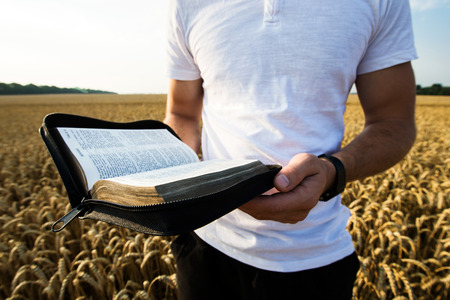 Hombre que sostiene la Biblia abierta en un campo de trigo Foto de archivo