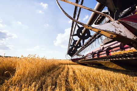 밀 수확하는 결합 수확기의 사진