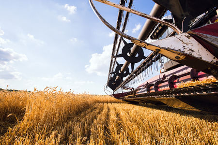 harvest field: Photo of combine harvester that is harvesting wheat
