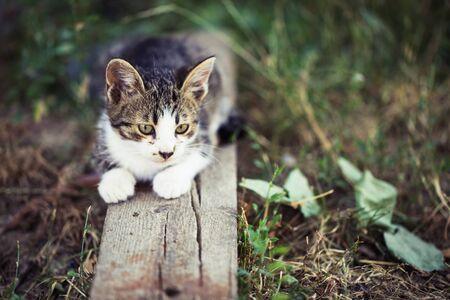 작은 tabby 새끼 고양이 나무에 앉아