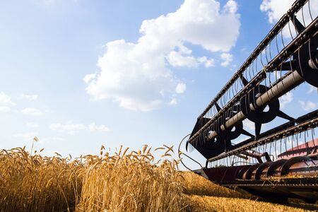 wheat: Photo of combine harvester that is harvesting wheat