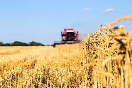 小麦の収穫は写真をコンバインハーベします。