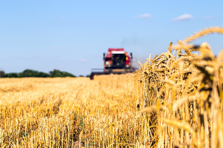 grain fields: Photo of combine harvester that is harvesting wheat