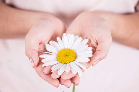 girl care: camomile in the hands of a girl Stock Photo