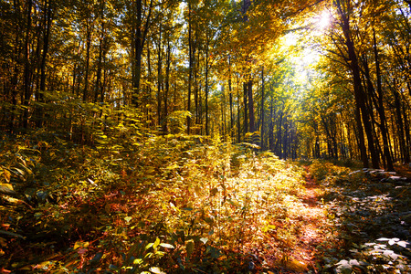 background the nature: autumn forest