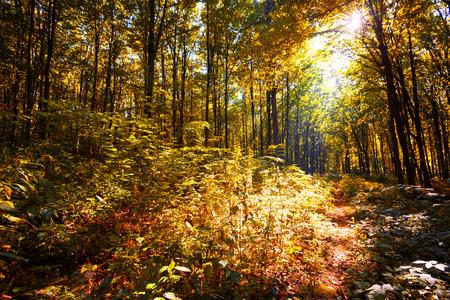luz natural: el otoño de los bosques