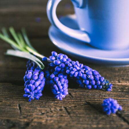 chicory coffee: Blue flowers and a cup of coffee on a wooden background Stock Photo