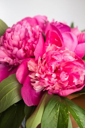pfingstrosen: rosa Pfingstrosen auf Holzuntergrund