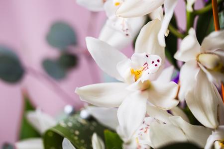 파란색 배경에 흰 난초 꽃