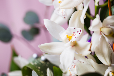 White orchid flower on blue background Stockfoto