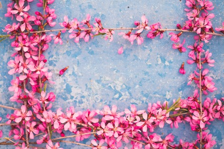 Spring flowering branches, pink flowers on a blue background Stock Photo