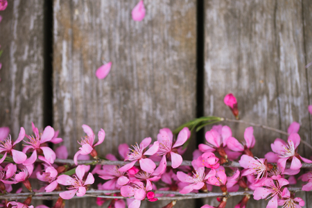 Beautiful spring flowers on old wooden background Stok Fotoğraf